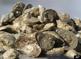 Oysters Extinct