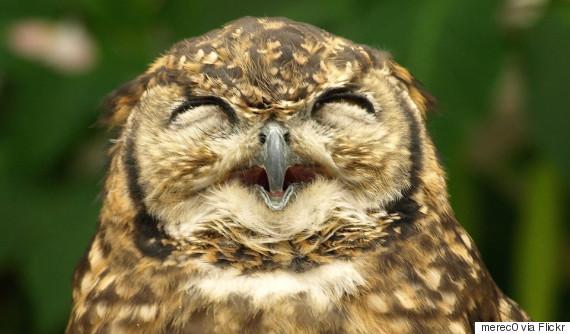 owl creative