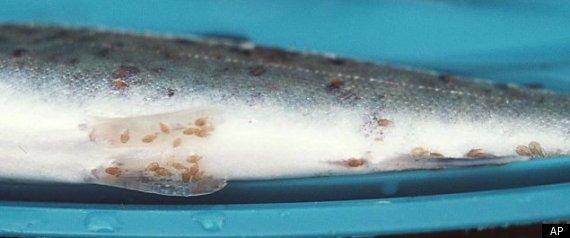 Why Salmon Matter
