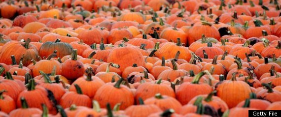 Hurricane Irene: Northeast Farmers Warn Of Pumpkin Shortage Induced By Storm