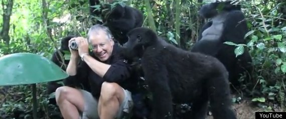 Gorillas Pet Tourist