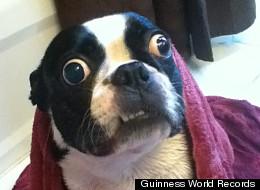 Bruschi Big Eyed Dog