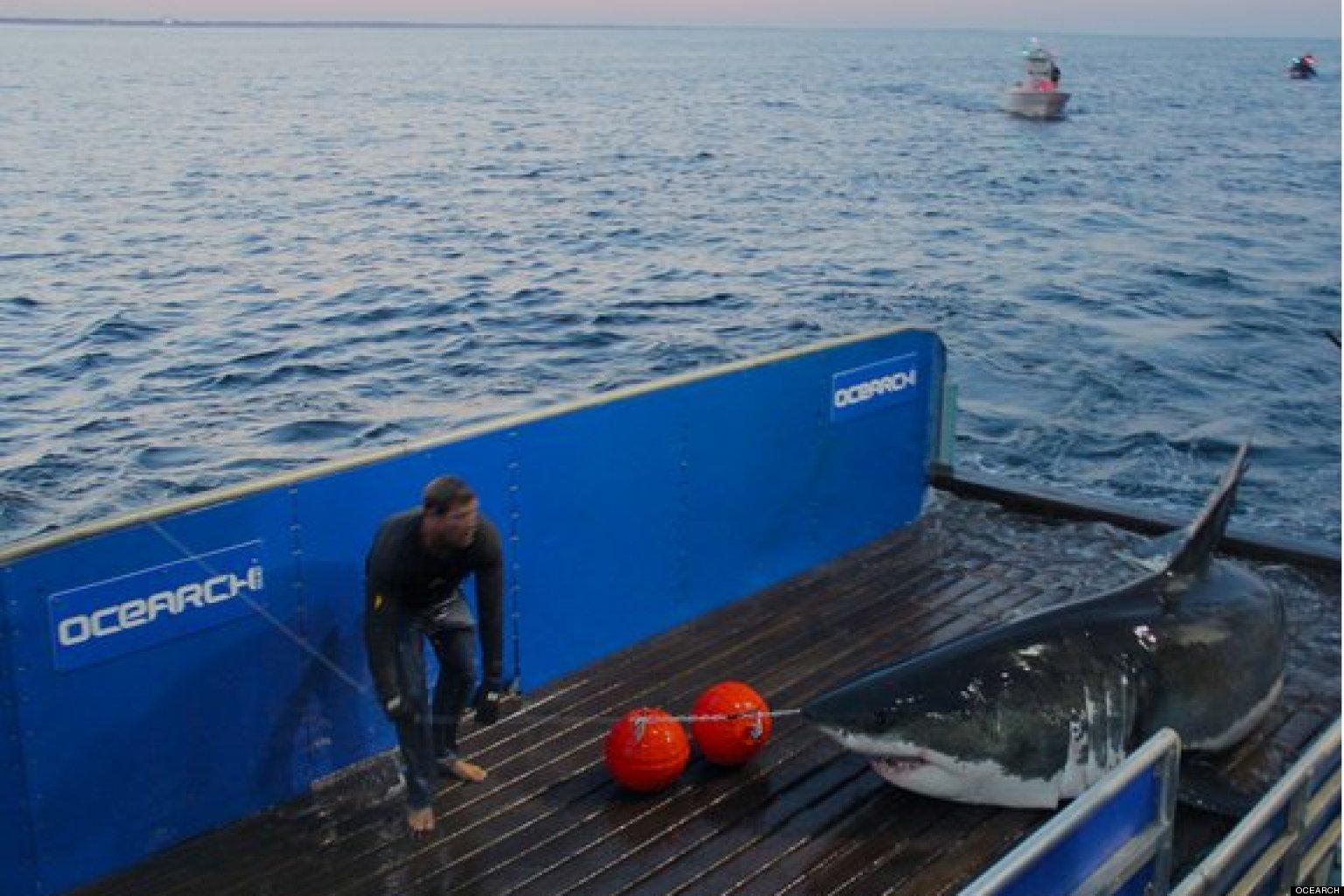 Aquarium Cape Cod