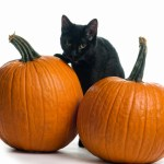 That Old Black Cat Magic Fiction Gets Real Classic Literary Characters Transported To The Modern World