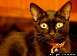 Cat Color Discrimination