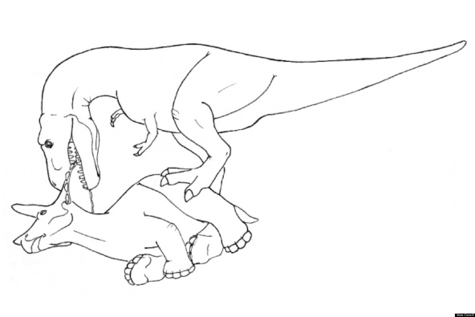 How To Eat A Triceratops Illustrations Reveal T Rex S