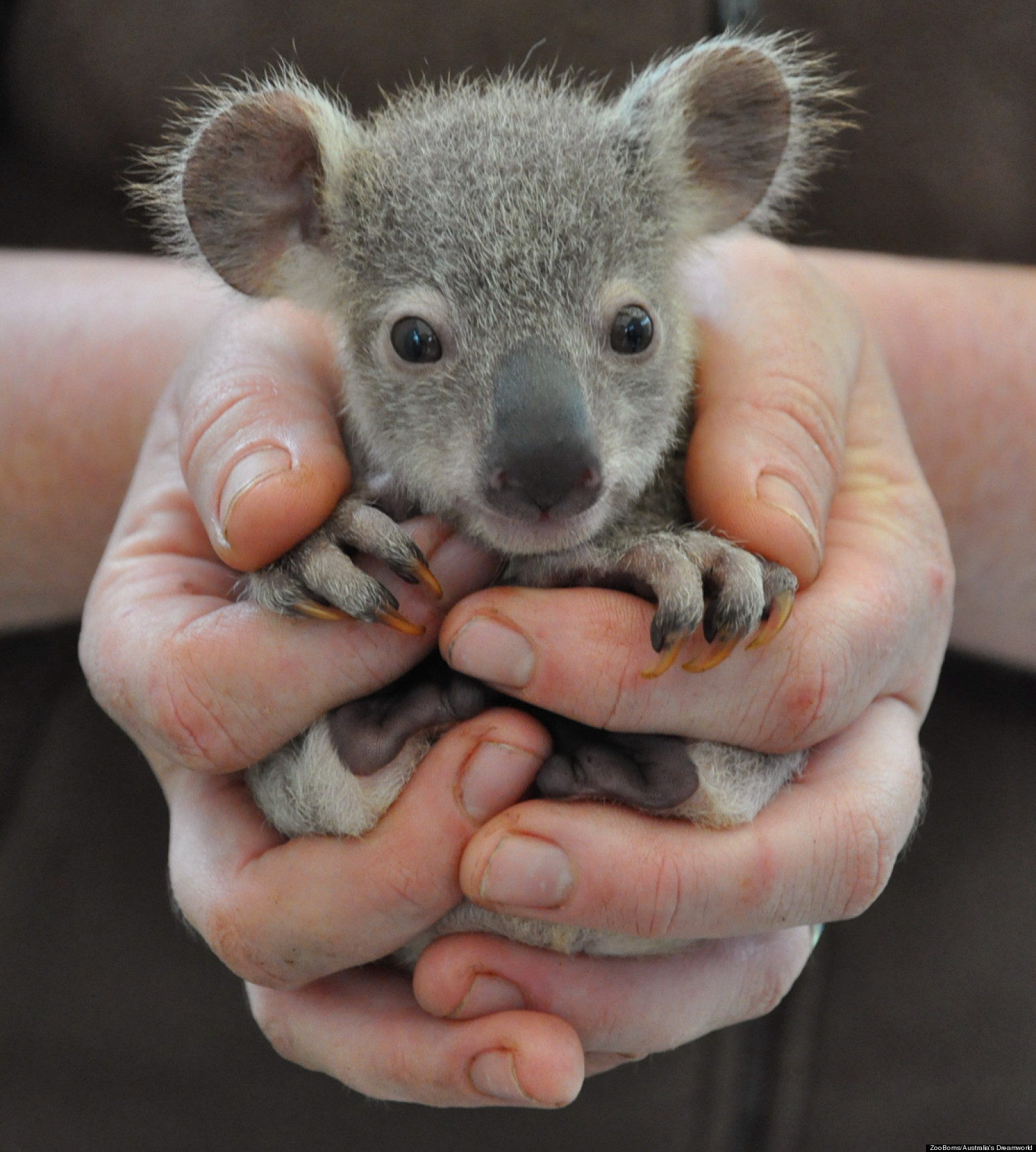 Zooborns Baby Animal Photos Are Adorable By The Numbers