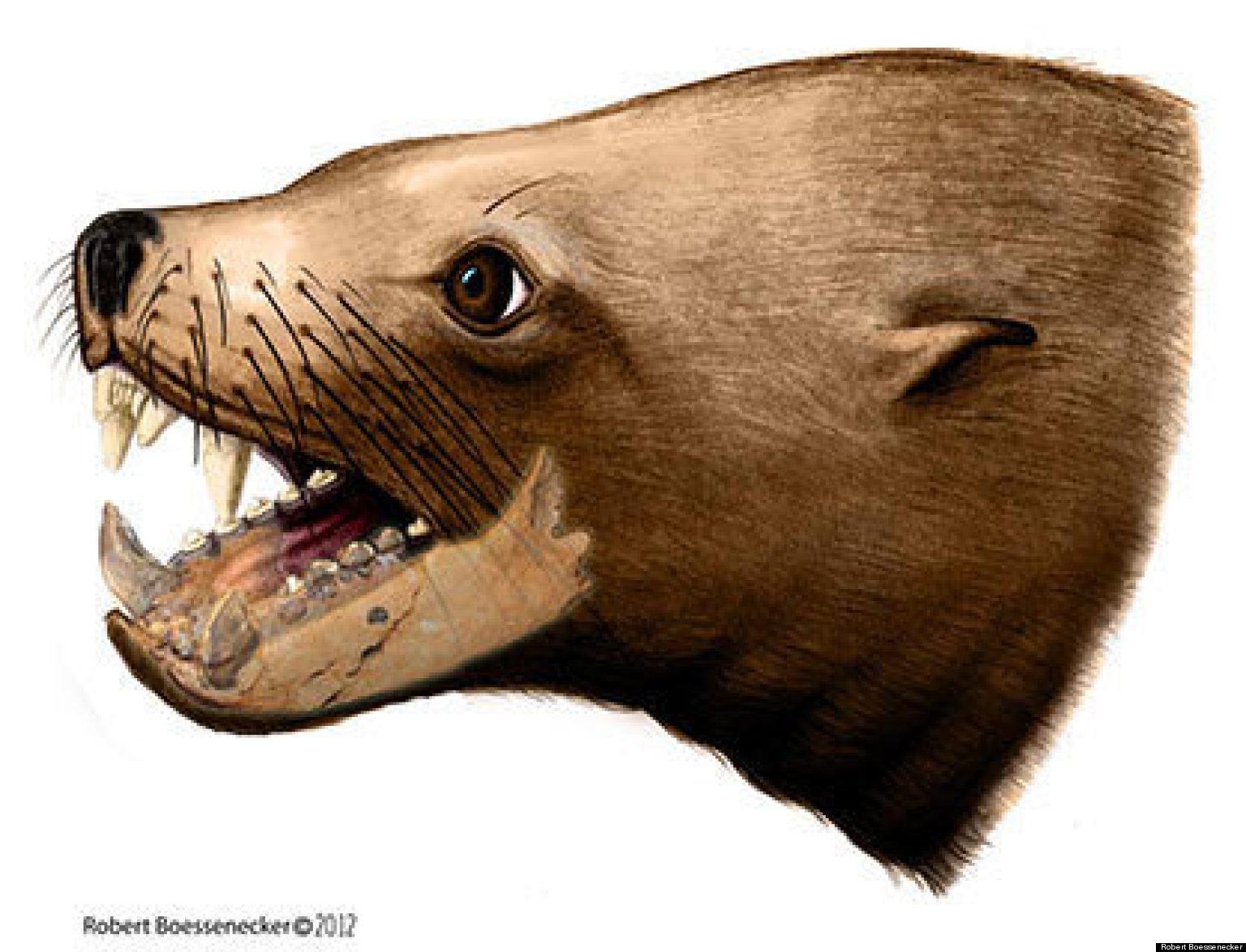 Killer Walrus Teeth Fossils Suggest Prehistoric Mammal