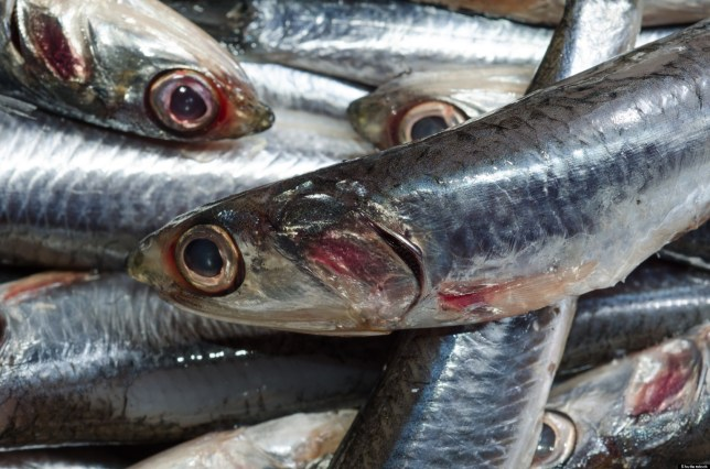 Image result for mercury fish