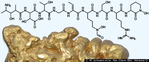 Gold Bacteria