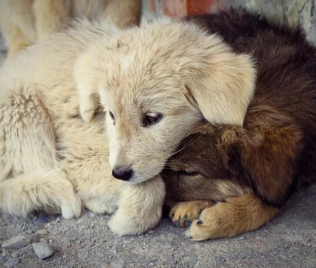 Landmark Government Bill In Turkey Proposes Animals Are Not Property