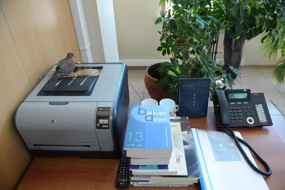 Doves build nest on printer in Bursa mayor's Office