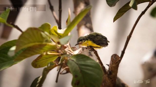 Branch-Chick-w-watermark-II