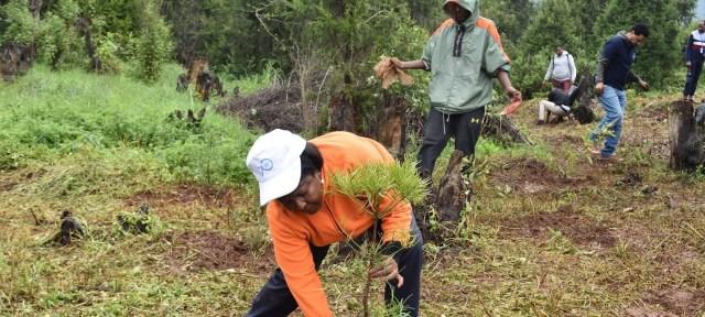 Un esfuerzo masivo para recuperar los bosques de Etiopía