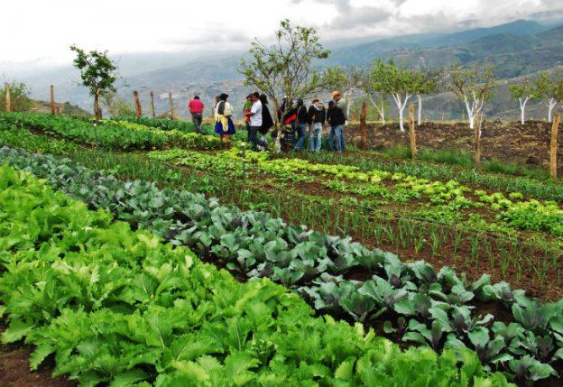 Nuevas iniciativas agroecológicas frente a la crisis climática