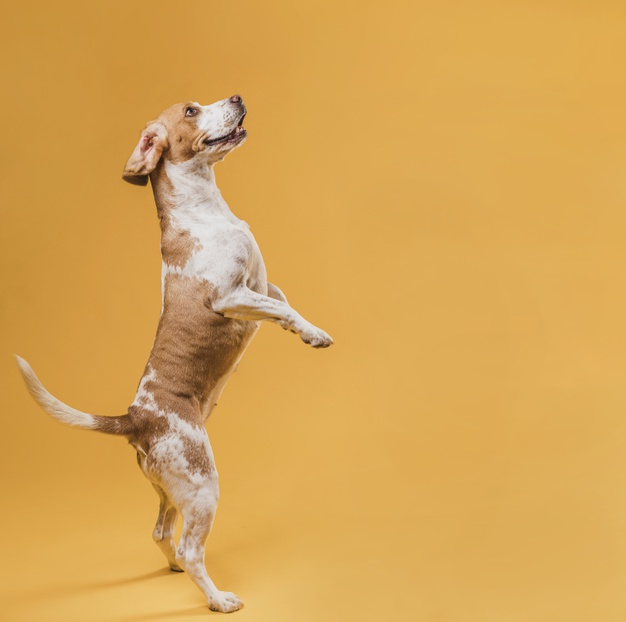dog Stand On Hind Legs