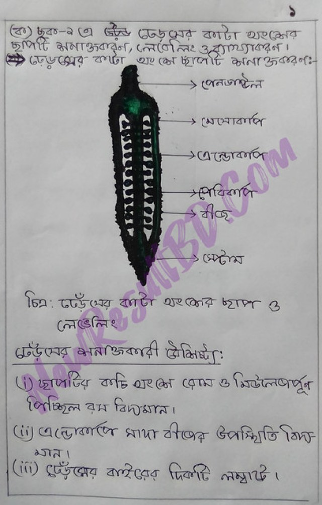 HSC Biology Assignment Answer 2021 pdf download (1st, 2nd 5th week) 30