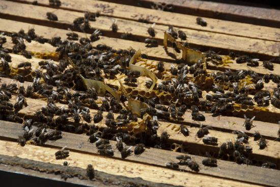 UPA acude al Ministerio a tratar de cerrar un etiquetado justo y transparente para la miel española