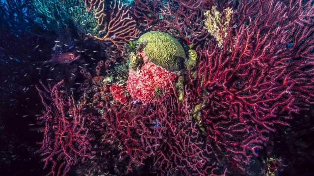 Las principales organizaciones ecologistas y científicas consideran inaceptable la pesca de coral rojo aprobada por el Gobierno