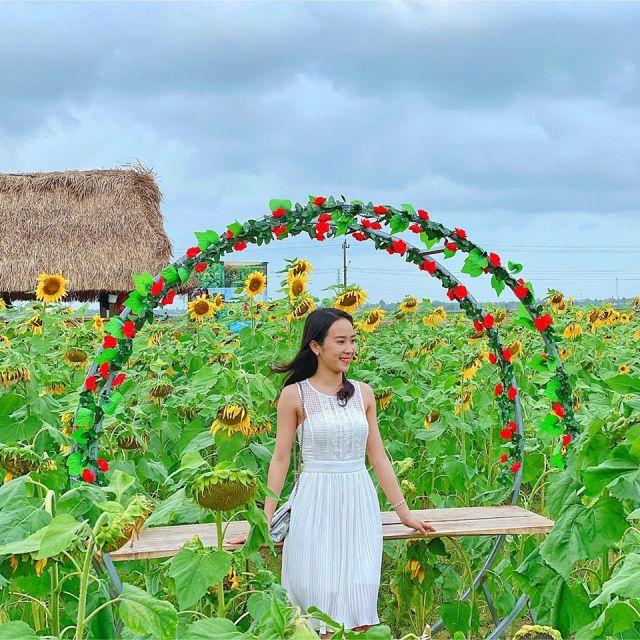 vườn hoa hướng dương Văn Thánh - Hương Hồ