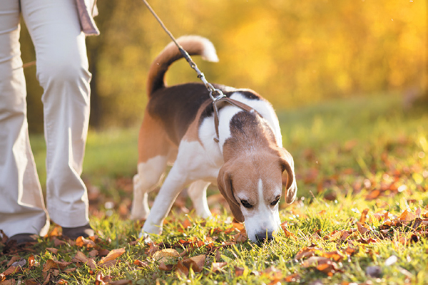Leave It, dog training, dog tricks, teach your dog tricks, train dogs