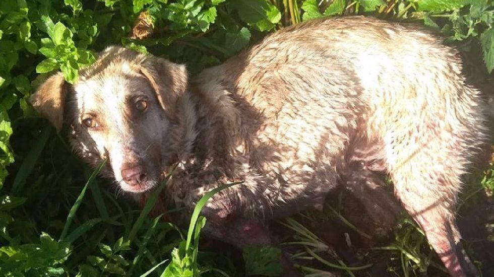 El cazador de Chantada que disparó, apaleó y arrastró a la perrita Alma, dice que lo hizo porque era «un peligro para los coches»