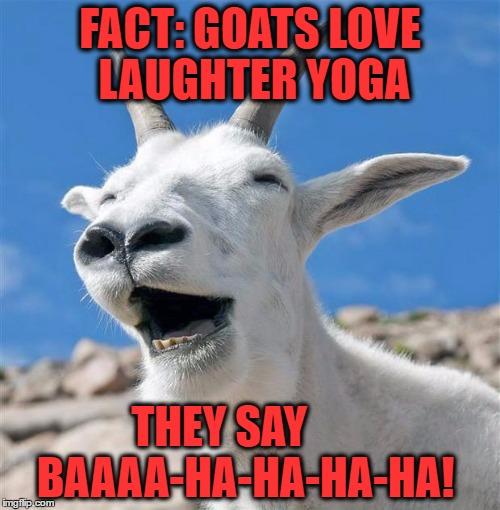 Laughing Goat Meme Imgflip