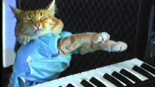 Image result for piano cat meme