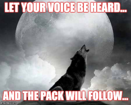 White Wolf Howling Memes Gifs Imgflip