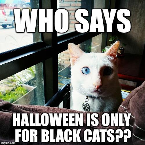 White Cat Halloween Imgflip