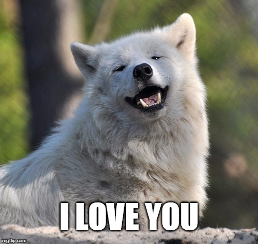 Wolf Love Cuddles Cute Smile Memes Gifs Imgflip