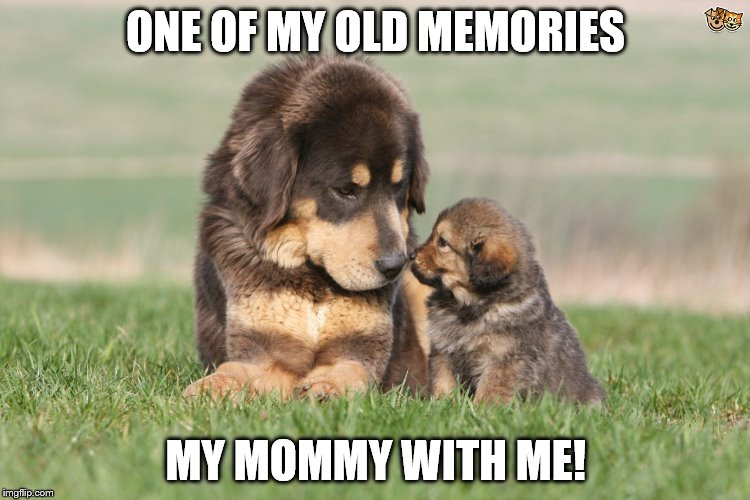 Memories with My Mom