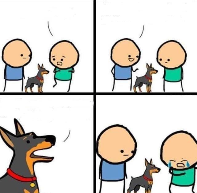 All My Memes Templates Stupid Short Eevee Comic Amino