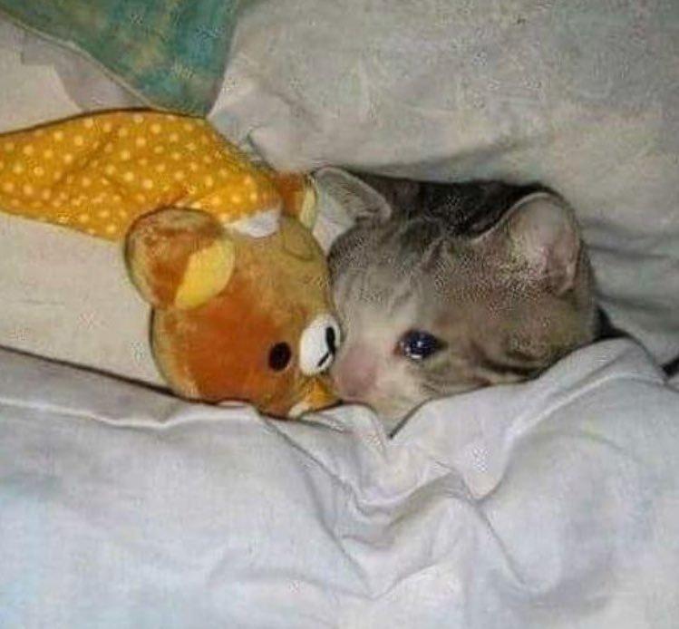 Crying Cat Meming Wiki