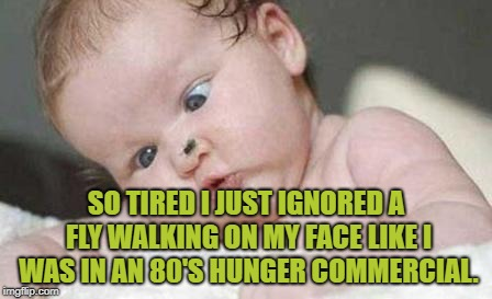Image Tagged In Tired Fly Hunger Funny Memes Funny Memes Imgflip
