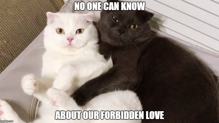 Image Tagged In Funny Cat Memes Cats Black And White Romance