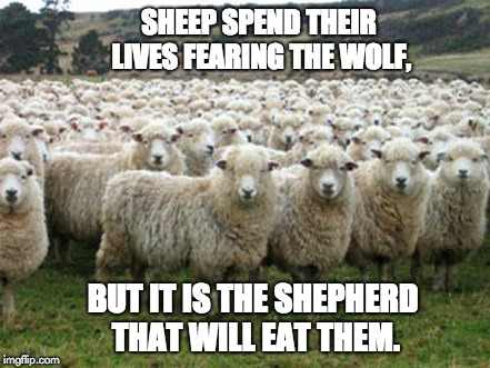 Image tagged in sheep - Imgflip