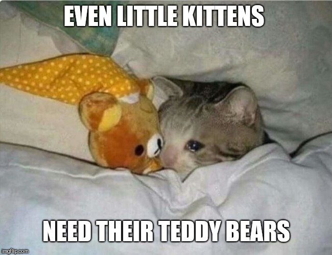 Image Tagged In Cute Kittens Imgflip