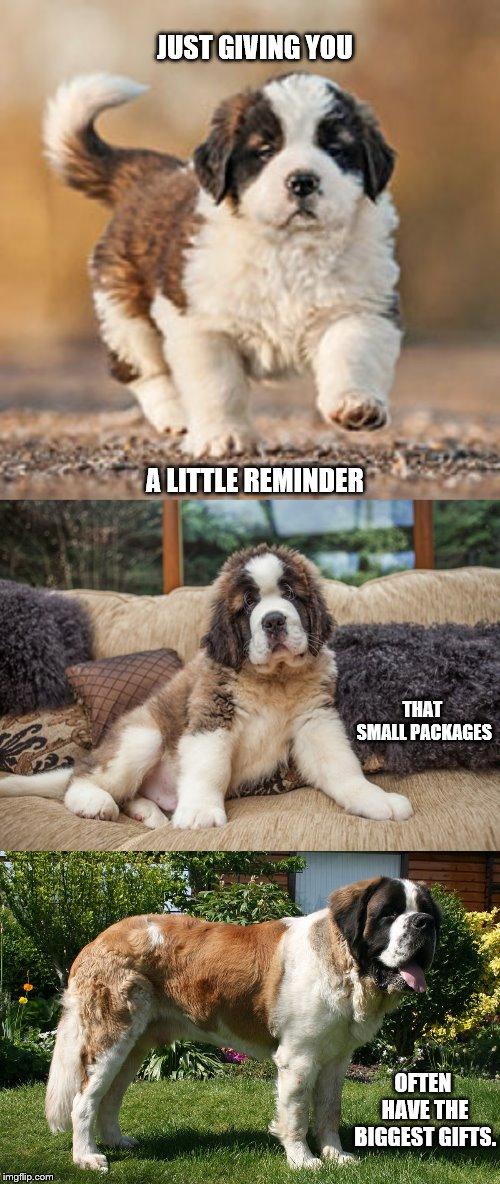 Sploot 101 12 Animal Slang Words Every Pet Parent Should Know