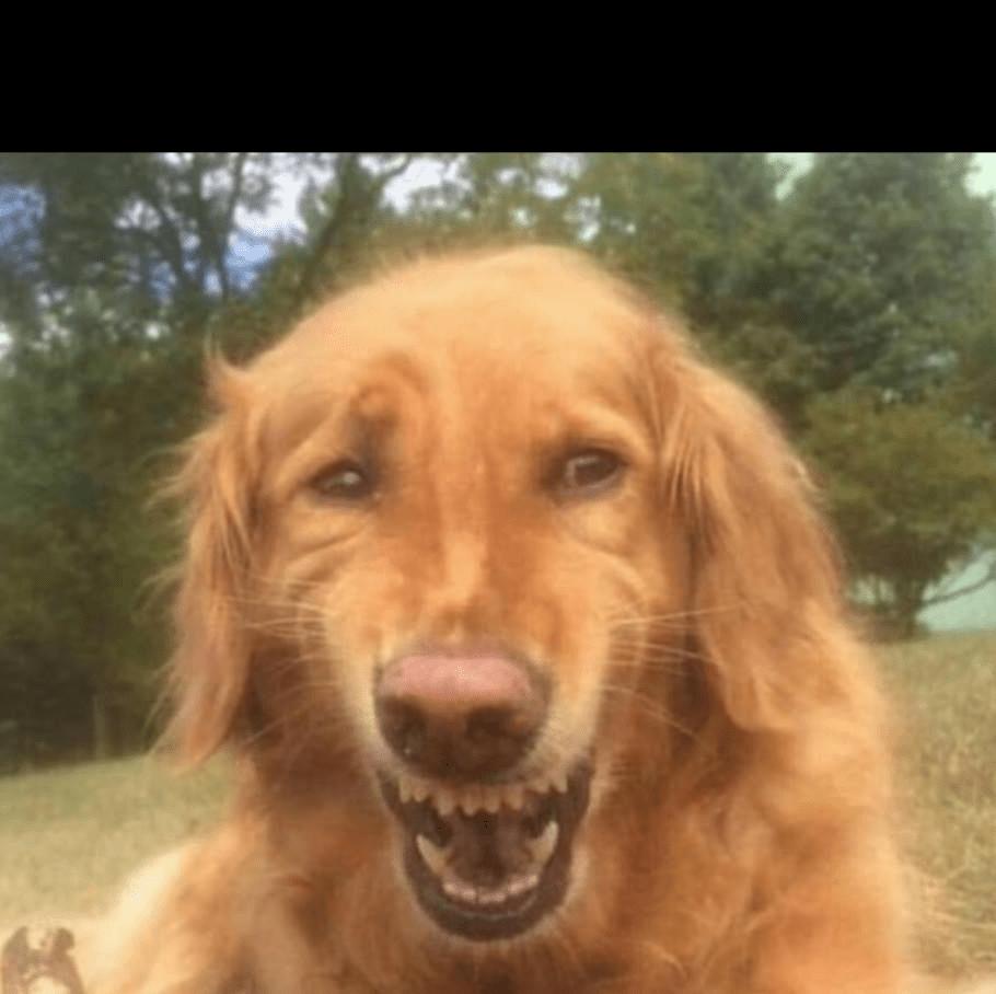 Fake Laugh Meme Generator لم يسبق له مثيل الصور Tier3 Xyz