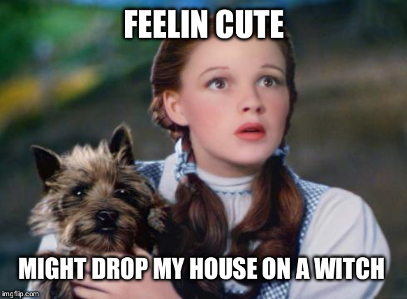 Toto Wizard Of Oz Imgflip