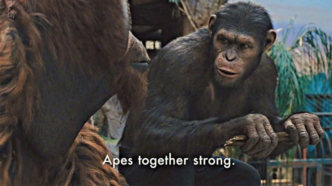 Ape Together Strong Blank Template Imgflip