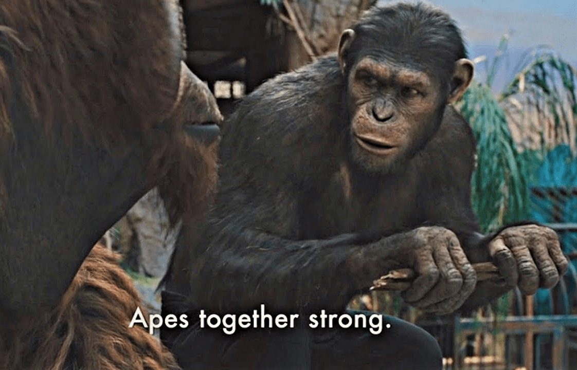 Apes Together Strong Blank Template Imgflip