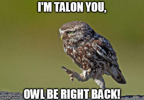 Owl Be Right Back