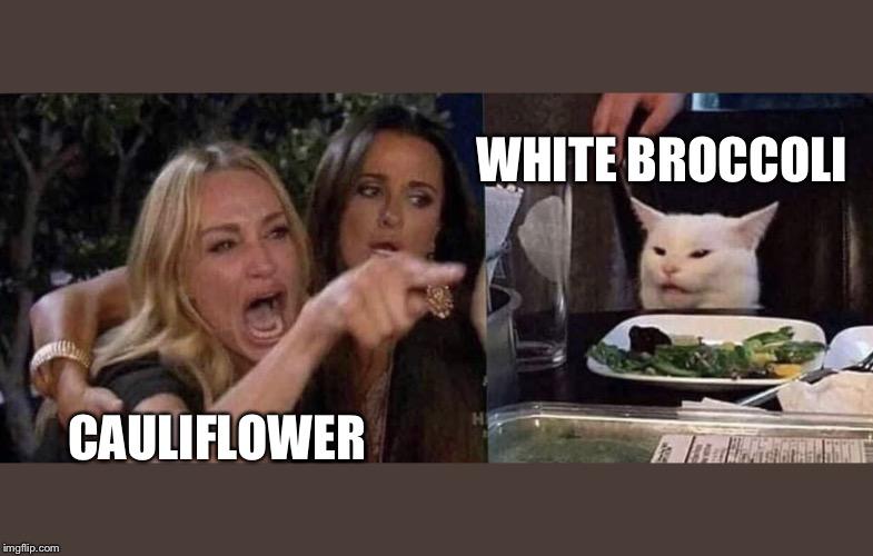 Woman Yelling At Cat Imgflip