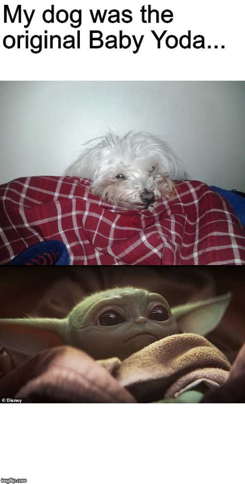 It S The Cutest Thing R Babyyoda Baby Yoda Know Your Meme