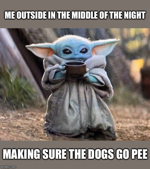 Making A Baby Yoda Meme Using My Dog Willow Because She S Just As