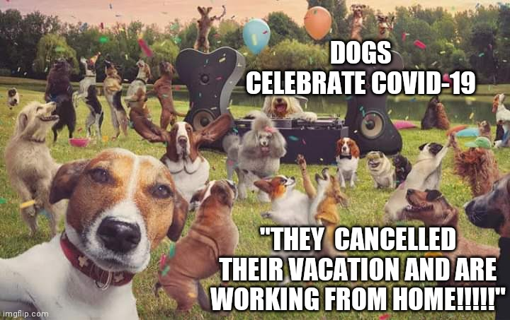 Image Tagged In Dogs Celebrate Imgflip