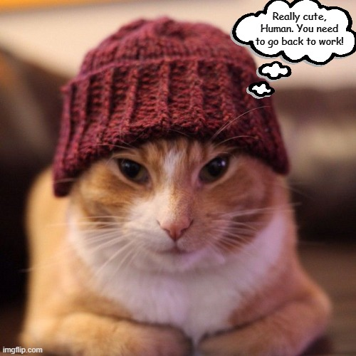 Image Tagged In Memes Cats What Cats Are Thinking Quarantine Covid