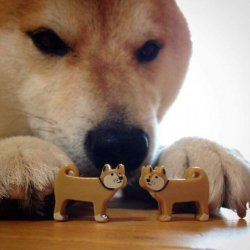The Dog Is Getting Better At Chess He Is He Has Eaten Only A
